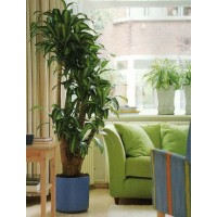 Размещение растений дома